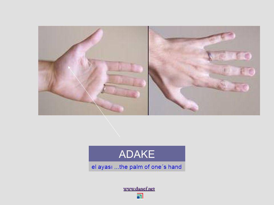 www.danef.net APE Parmak ucu...finger tip