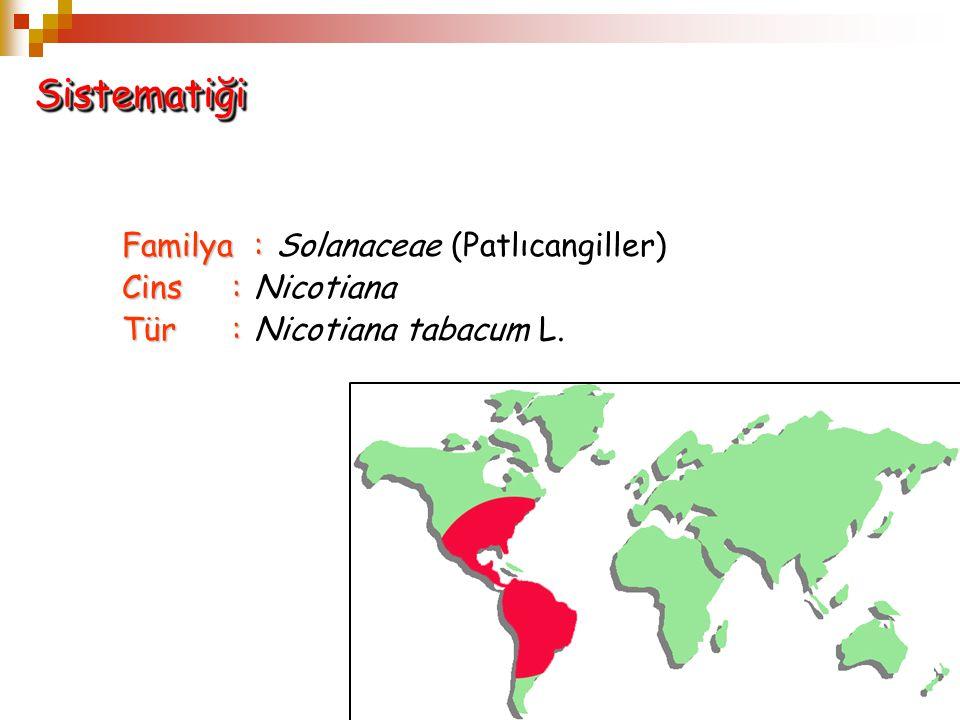 Familya: Familya: Solanaceae (Patlıcangiller) Cins: Cins: Nicotiana Tür: Tür: Nicotiana tabacum L. SistematiğiSistematiği