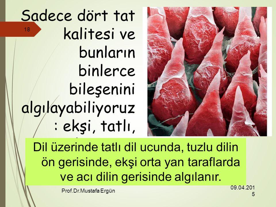 09.04.2015 Prof.Dr.Mustafa Ergün 18 Sadece dört tat kalitesi ve bunların binlerce bileşenini algılayabiliyoruz : ekşi, tatlı, tuzlu ve acı.