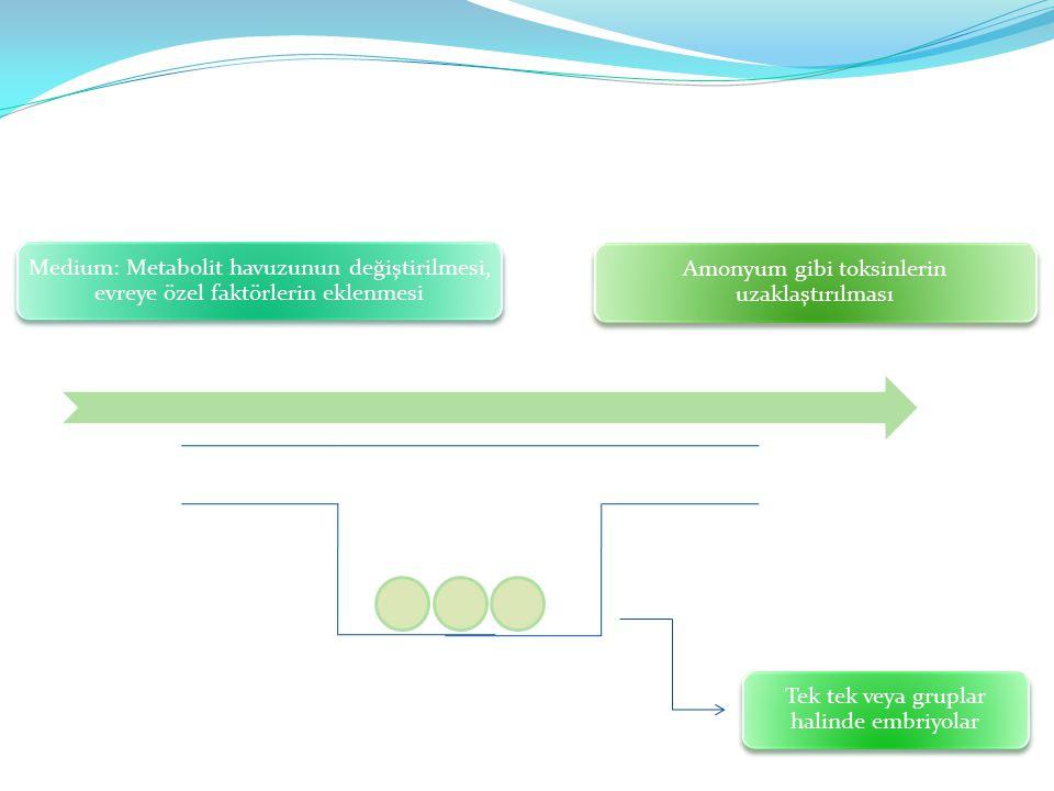 Medium: Metabolit havuzunun değiştirilmesi, evreye özel faktörlerin eklenmesi Tek tek veya gruplar halinde embriyolar Amonyum gibi toksinlerin uzaklaş