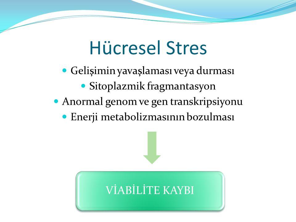 Hücresel Stres Gelişimin yavaşlaması veya durması Sitoplazmik fragmantasyon Anormal genom ve gen transkripsiyonu Enerji metabolizmasının bozulması VİA