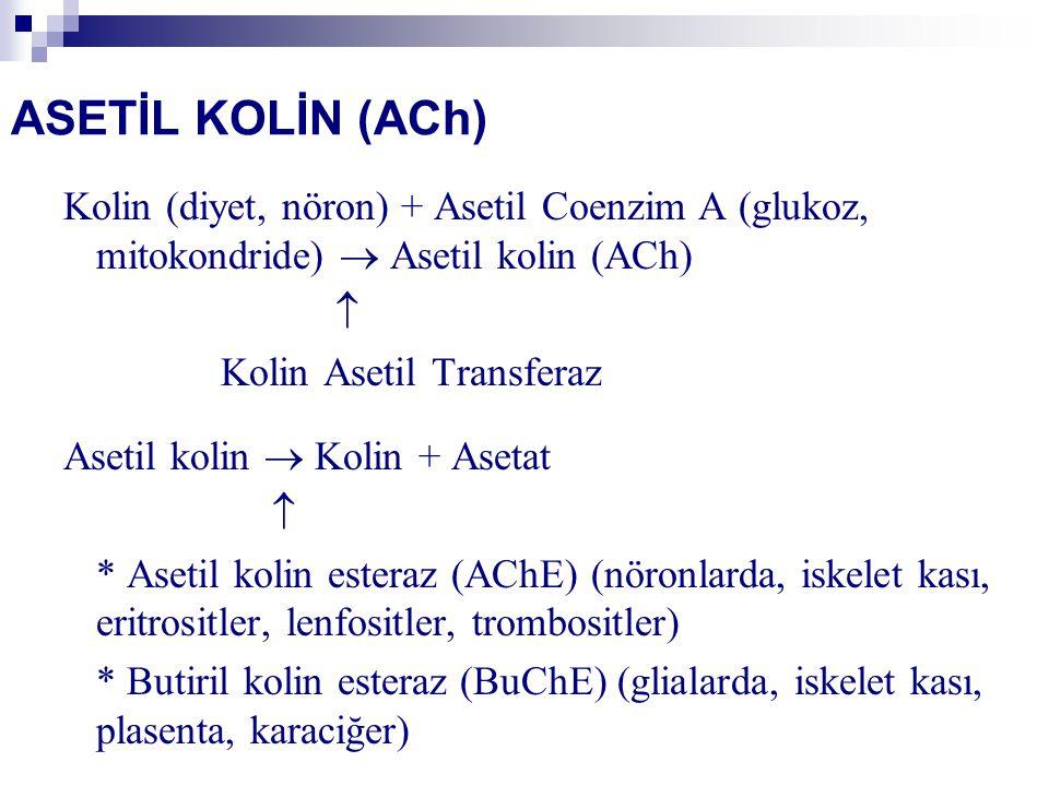 ASETİL KOLİN (ACh) Kolin (diyet, nöron) + Asetil Coenzim A (glukoz, mitokondride)  Asetil kolin (ACh)  Kolin Asetil Transferaz Asetil kolin  Kolin + Asetat  * Asetil kolin esteraz (AChE) (nöronlarda, iskelet kası, eritrositler, lenfositler, trombositler) * Butiril kolin esteraz (BuChE) (glialarda, iskelet kası, plasenta, karaciğer)