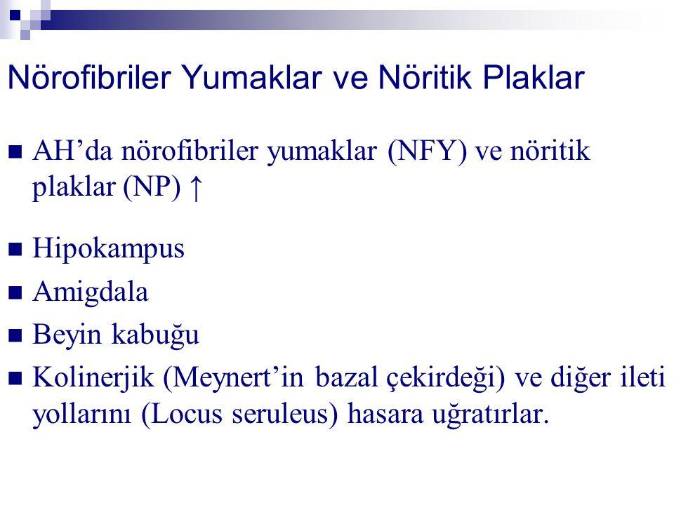 Nörofibriler Yumaklar ve Nöritik Plaklar AH'da nörofibriler yumaklar (NFY) ve nöritik plaklar (NP) ↑ Hipokampus Amigdala Beyin kabuğu Kolinerjik (Meyn
