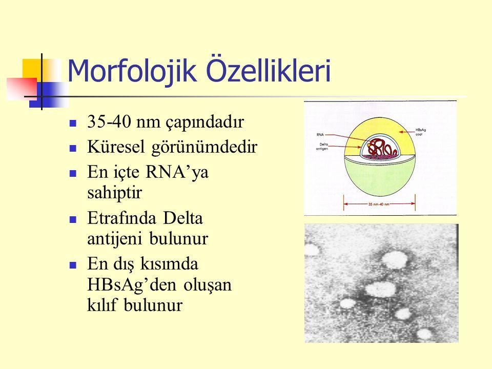 Morfolojik Özellikleri 35-40 nm çapındadır Küresel görünümdedir En içte RNA'ya sahiptir Etrafında Delta antijeni bulunur En dış kısımda HBsAg'den oluş