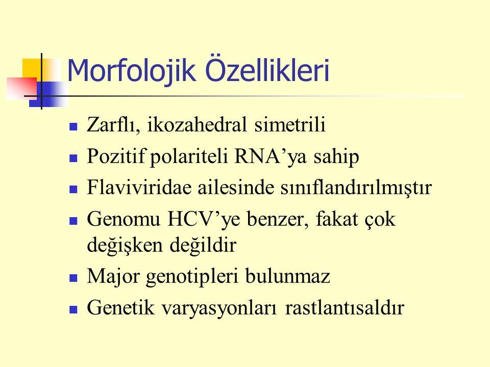 Morfolojik Özellikleri Zarflı, ikozahedral simetrili Pozitif polariteli RNA'ya sahip Flaviviridae ailesinde sınıflandırılmıştır Genomu HCV'ye benzer,
