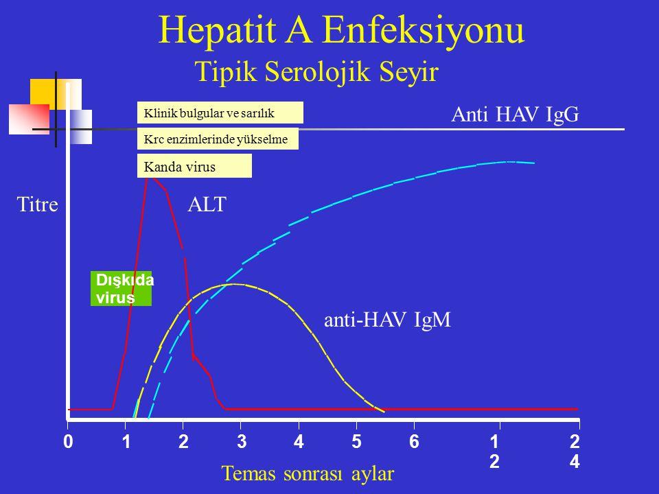 Dışkıda virus 0123 4561212 2424 Hepatit A Enfeksiyonu Anti HAV IgG TitreALT anti-HAV IgM Temas sonrası aylar Tipik Serolojik Seyir Klinik bulgular ve