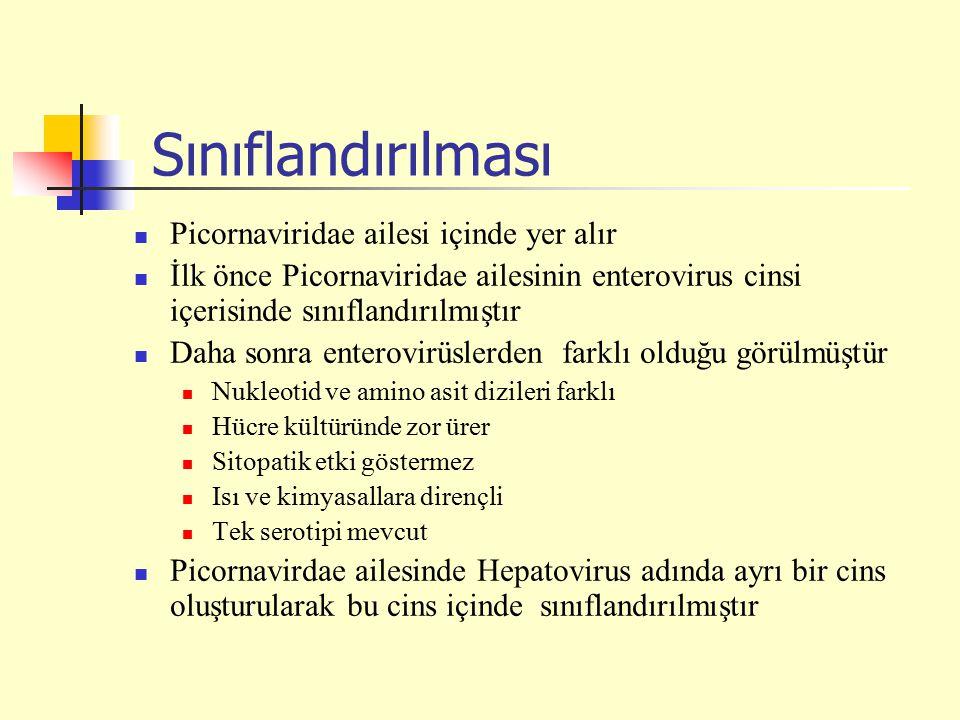 Sınıflandırılması Picornaviridae ailesi içinde yer alır İlk önce Picornaviridae ailesinin enterovirus cinsi içerisinde sınıflandırılmıştır Daha sonra