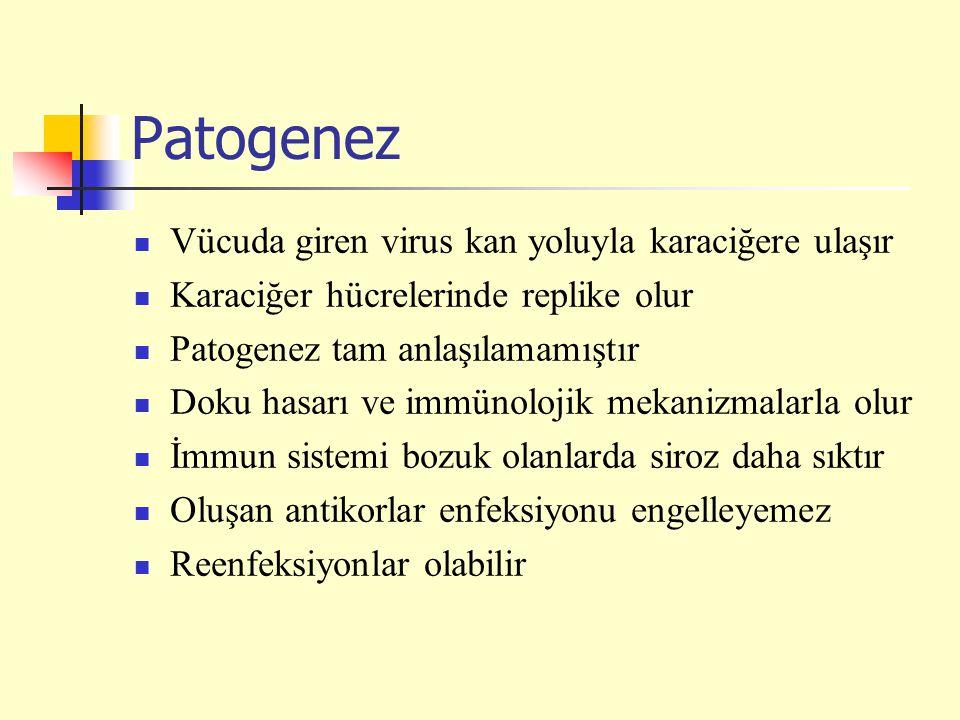Patogenez Vücuda giren virus kan yoluyla karaciğere ulaşır Karaciğer hücrelerinde replike olur Patogenez tam anlaşılamamıştır Doku hasarı ve immünolojik mekanizmalarla olur İmmun sistemi bozuk olanlarda siroz daha sıktır Oluşan antikorlar enfeksiyonu engelleyemez Reenfeksiyonlar olabilir