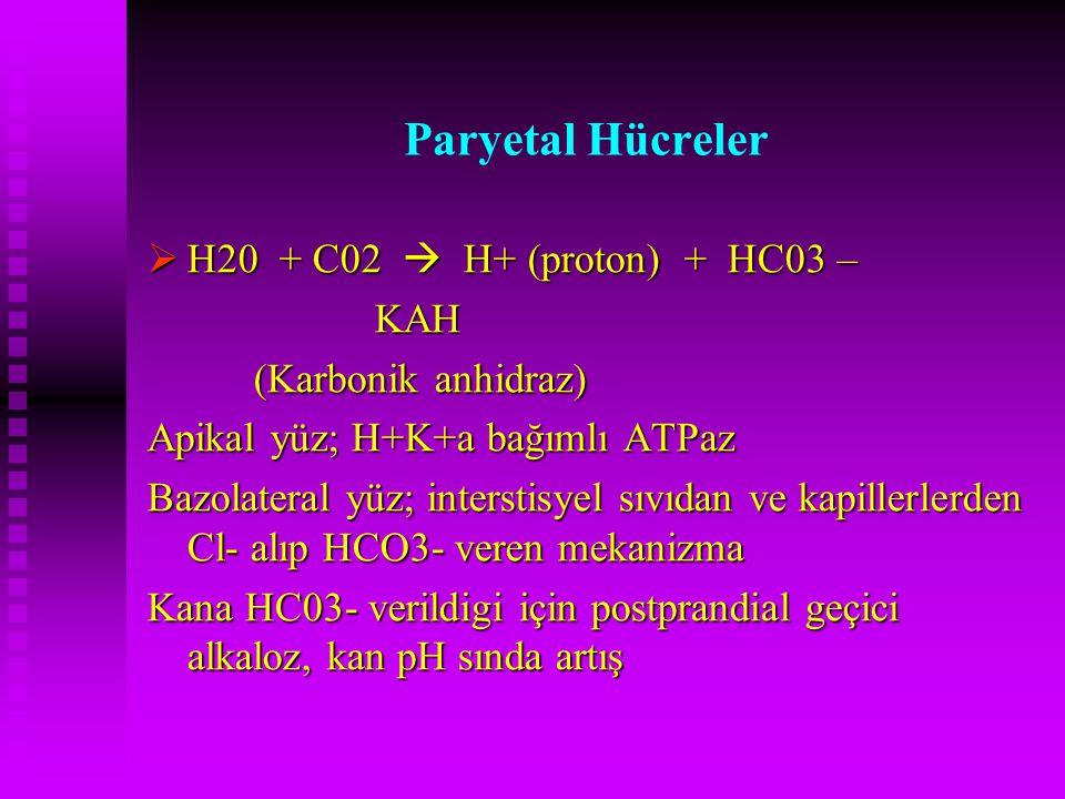 Paryetal Hücreler  H20 + C02  H+ (proton) + HC03 – KAH KAH (Karbonik anhidraz) Apikal yüz; H+K+a bağımlı ATPaz Bazolateral yüz; interstisyel sıvıdan