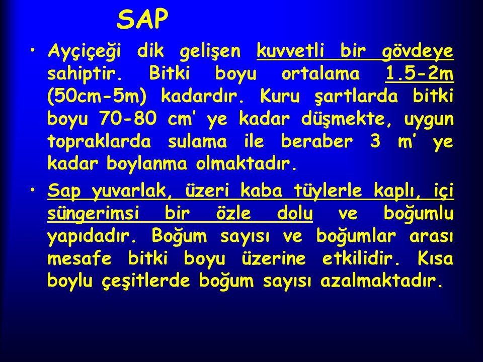 SAP Ayçiçeği dik gelişen kuvvetli bir gövdeye sahiptir. Bitki boyu ortalama 1.5-2m (50cm-5m) kadardır. Kuru şartlarda bitki boyu 70-80 cm' ye kadar dü