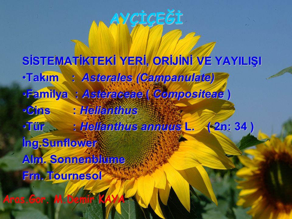 AYÇİÇEĞİ SİSTEMATİKTEKİ YERİ, ORİJİNİ VE YAYILIŞI Takım : Asterales (Campanulate)Takım : Asterales (Campanulate) Familya : Asteraceae ( Compositeae )F