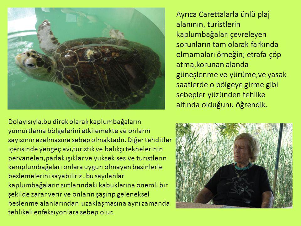 Ayrıca Carettalarla ünlü plaj alanının, turistlerin kaplumbağaları çevreleyen sorunların tam olarak farkında olmamaları örneğin; etrafa çöp atma,korunan alanda güneşlenme ve yürüme,ve yasak saatlerde o bölgeye girme gibi sebepler yüzünden tehlike altında olduğunu öğrendik.