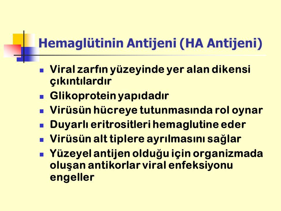 Hemaglütinin Antijeni (HA Antijeni) Viral zarfın yüzeyinde yer alan dikensi çıkıntılardır Glikoprotein yapıdadır Virüsün hücreye tutunmasında rol oyna