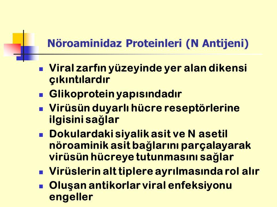 Nöroaminidaz Proteinleri (N Antijeni) Viral zarfın yüzeyinde yer alan dikensi çıkıntılardır Glikoprotein yapısındadır Virüsün duyarlı hücre reseptörle