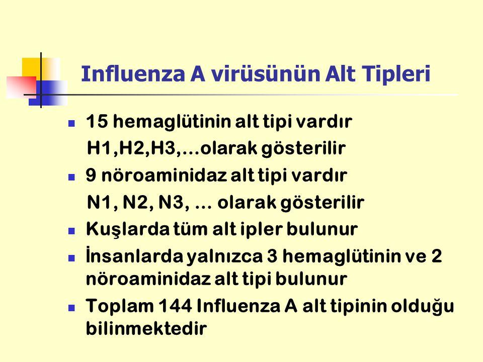 Influenza A virüsünün Alt Tipleri 15 hemaglütinin alt tipi vardır H1,H2,H3,…olarak gösterilir 9 nöroaminidaz alt tipi vardır N1, N2, N3, … olarak göst