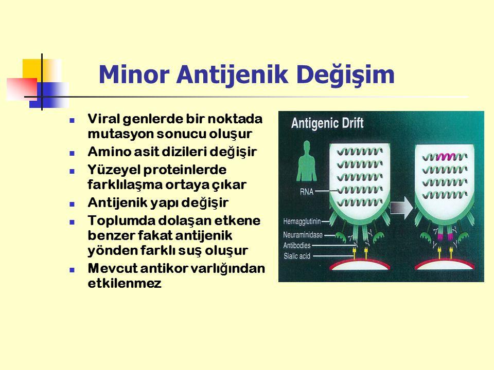 Minor Antijenik Değişim Viral genlerde bir noktada mutasyon sonucu olu ş ur Amino asit dizileri de ğ i ş ir Yüzeyel proteinlerde farklıla ş ma ortaya