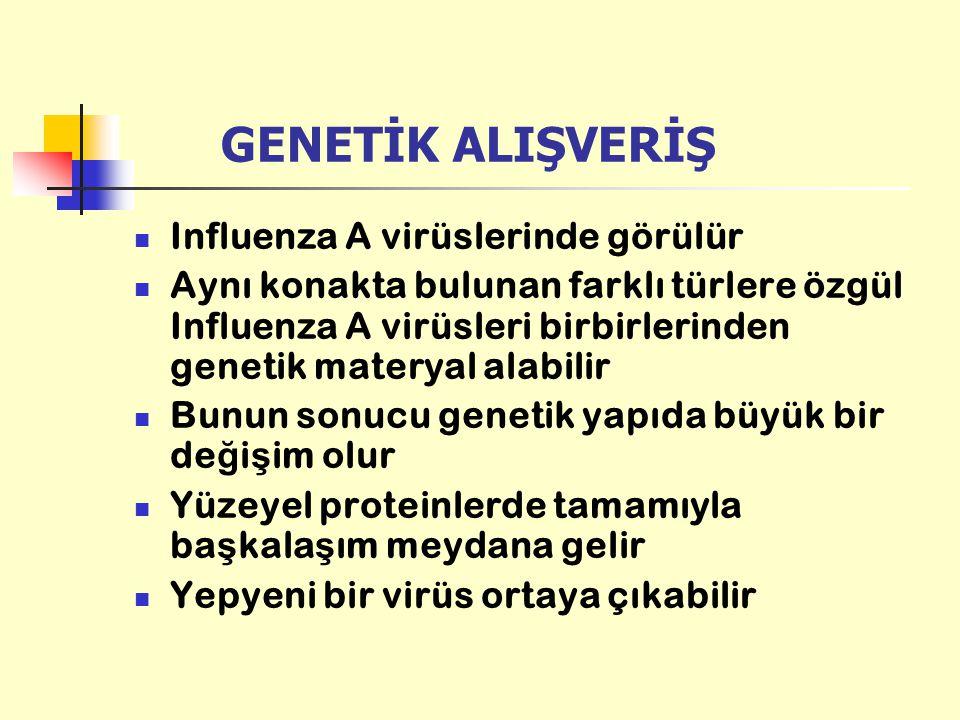 GENETİK ALIŞVERİŞ Influenza A virüslerinde görülür Aynı konakta bulunan farklı türlere özgül Influenza A virüsleri birbirlerinden genetik materyal ala