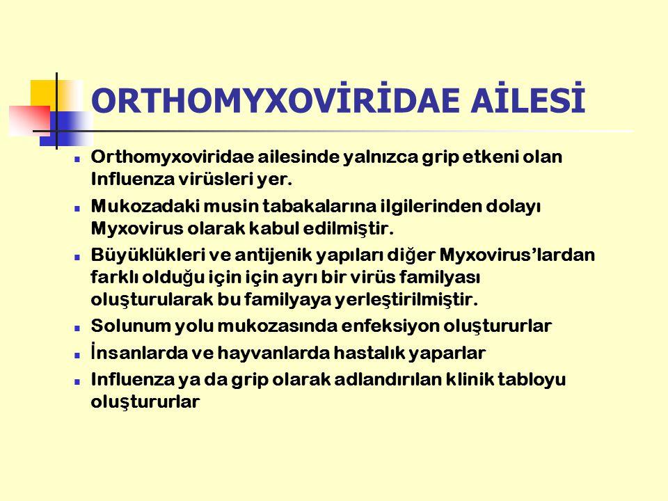 ORTHOMYXOVİRİDAE AİLESİ Orthomyxoviridae ailesinde yalnızca grip etkeni olan Influenza virüsleri yer. Mukozadaki musin tabakalarına ilgilerinden dolay