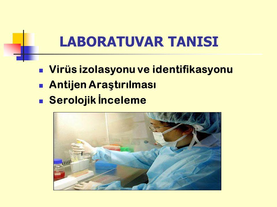 LABORATUVAR TANISI Virüs izolasyonu ve identifikasyonu Antijen Ara ş tırılması Serolojik İ nceleme