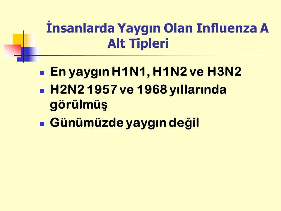 İnsanlarda Yaygın Olan Influenza A Alt Tipleri En yaygın H1N1, H1N2 ve H3N2 H2N2 1957 ve 1968 yıllarında görülmü ş Günümüzde yaygın de ğ il