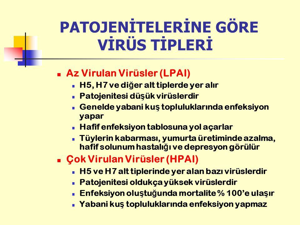 PATOJENİTELERİNE GÖRE VİRÜS TİPLERİ Az Virulan Virüsler (LPAI) H5, H7 ve di ğ er alt tiplerde yer alır Patojenitesi dü ş ük virüslerdir Genelde yabani