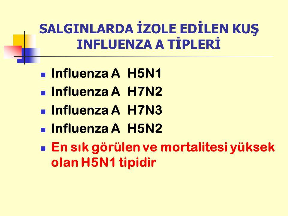 SALGINLARDA İZOLE EDİLEN KUŞ INFLUENZA A TİPLERİ Influenza A H5N1 Influenza A H7N2 Influenza A H7N3 Influenza A H5N2 En sık görülen ve mortalitesi yük
