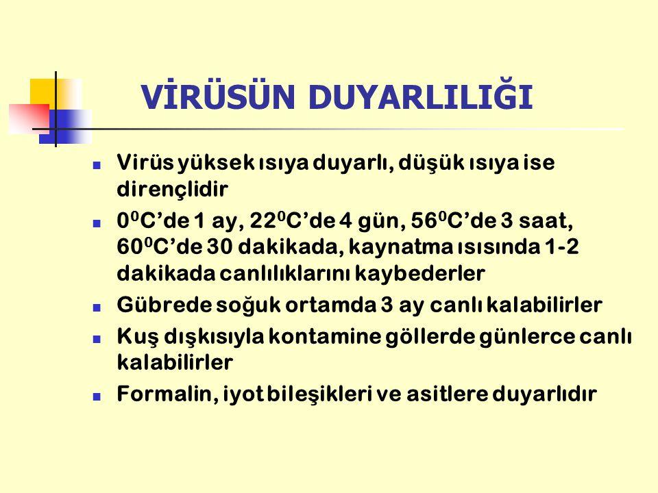 VİRÜSÜN DUYARLILIĞI Virüs yüksek ısıya duyarlı, dü ş ük ısıya ise dirençlidir 0 0 C'de 1 ay, 22 0 C'de 4 gün, 56 0 C'de 3 saat, 60 0 C'de 30 dakikada,
