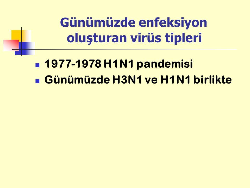 Günümüzde enfeksiyon oluşturan virüs tipleri 1977-1978 H1N1 pandemisi Günümüzde H3N1 ve H1N1 birlikte