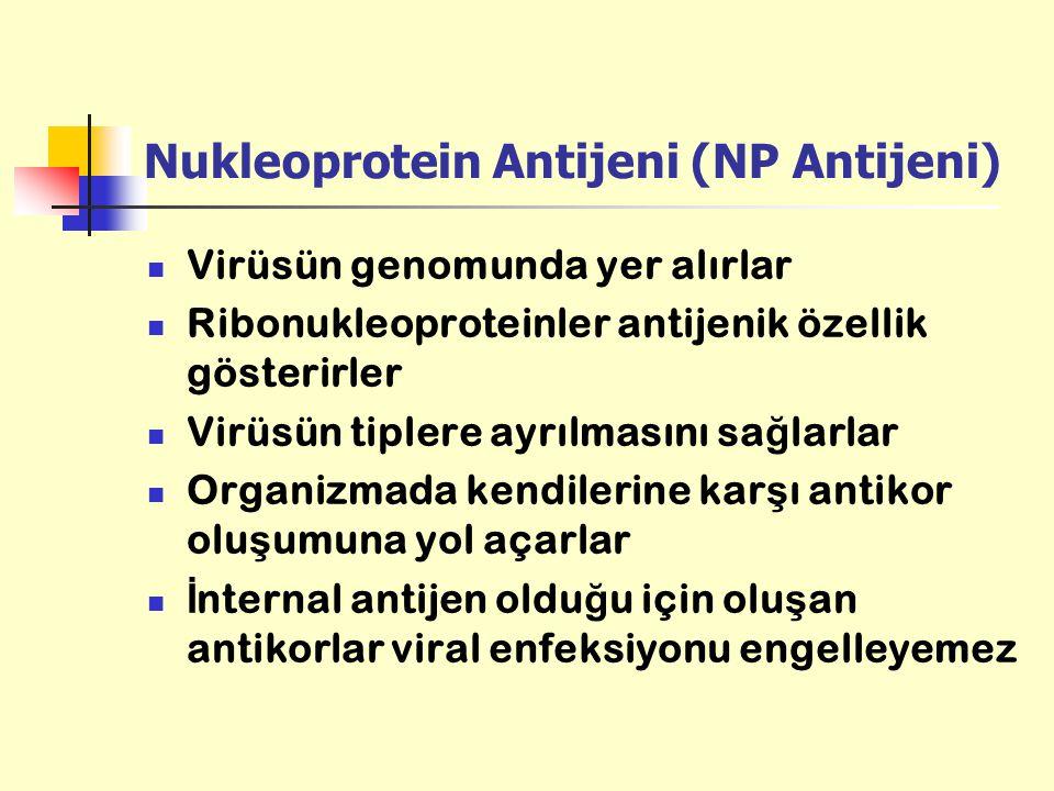 Nukleoprotein Antijeni (NP Antijeni) Virüsün genomunda yer alırlar Ribonukleoproteinler antijenik özellik gösterirler Virüsün tiplere ayrılmasını sa ğ