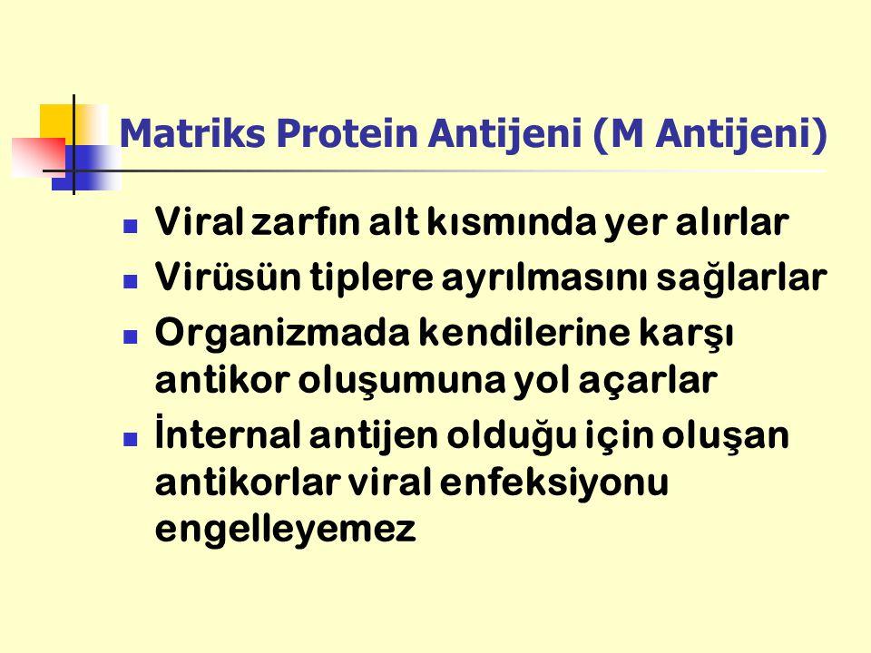 Matriks Protein Antijeni (M Antijeni) Viral zarfın alt kısmında yer alırlar Virüsün tiplere ayrılmasını sa ğ larlar Organizmada kendilerine kar ş ı an