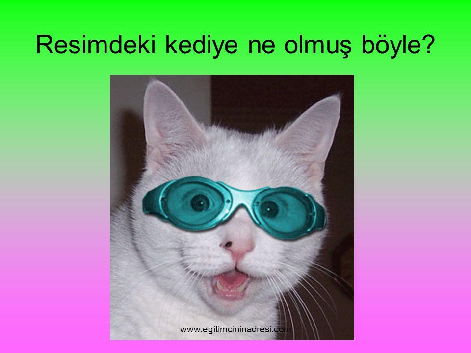 Resimdeki kediye ne olmuş böyle www.egitimcininadresi.com