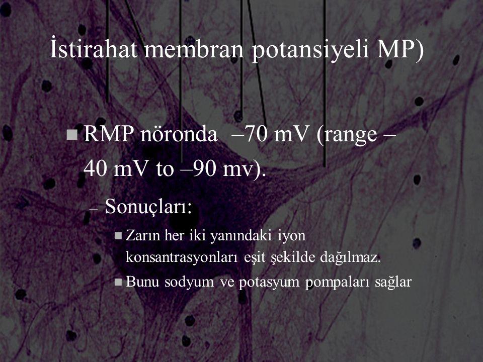 İstirahat membran potansiyeli MP) n RMP nöronda –70 mV (range – 40 mV to –90 mv). – Sonuçları: n Zarın her iki yanındaki iyon konsantrasyonları eşit ş