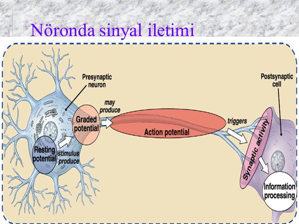 Nöronda sinyal iletimi