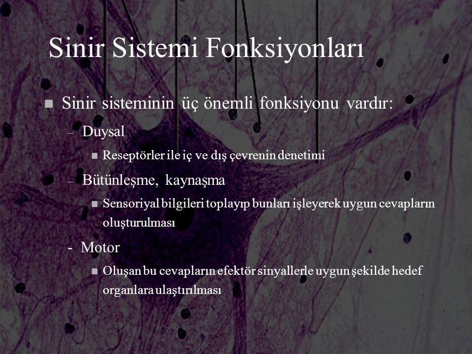 Sinir Sistemi Fonksiyonları n Sinir sisteminin üç önemli fonksiyonu vardır: – Duysal n Reseptörler ile iç ve dış çevrenin denetimi – Bütünleşme, kayna