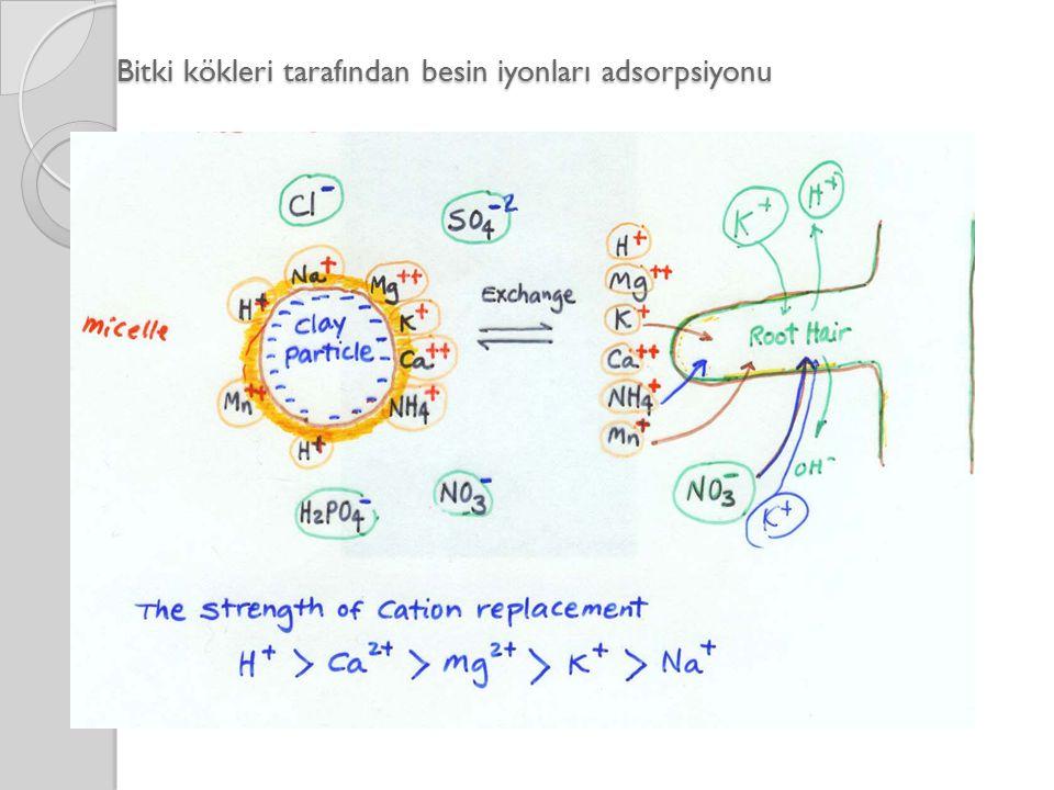 Bitki kökleri tarafından besin iyonları adsorpsiyonu