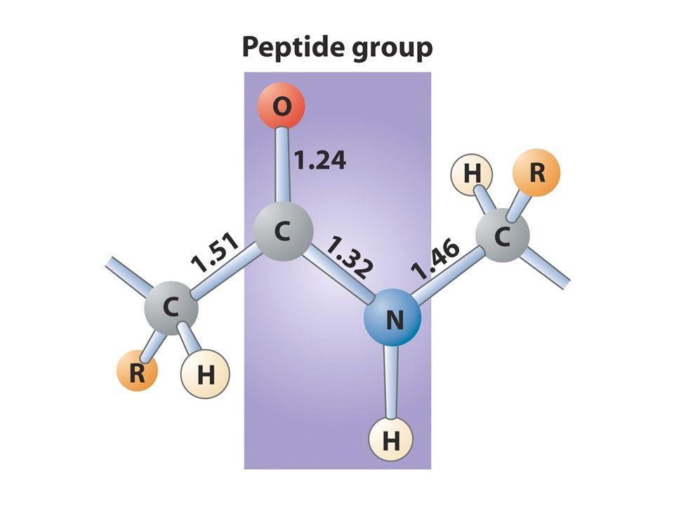 Proteinler 4 düzeyde organize olurlar Primer yapı düz lineer biçimde aa dizilimidir Sekonder yapı polipeptid zincirinin katlanmasıyla oluşan özel bir yapıdır bu yapı lineer yapıdaki yakın aa arasında bağ güçlerinden oluşur: zayıf bağlar (H bağları, elektrostatik güçler ve van der waals bağları).