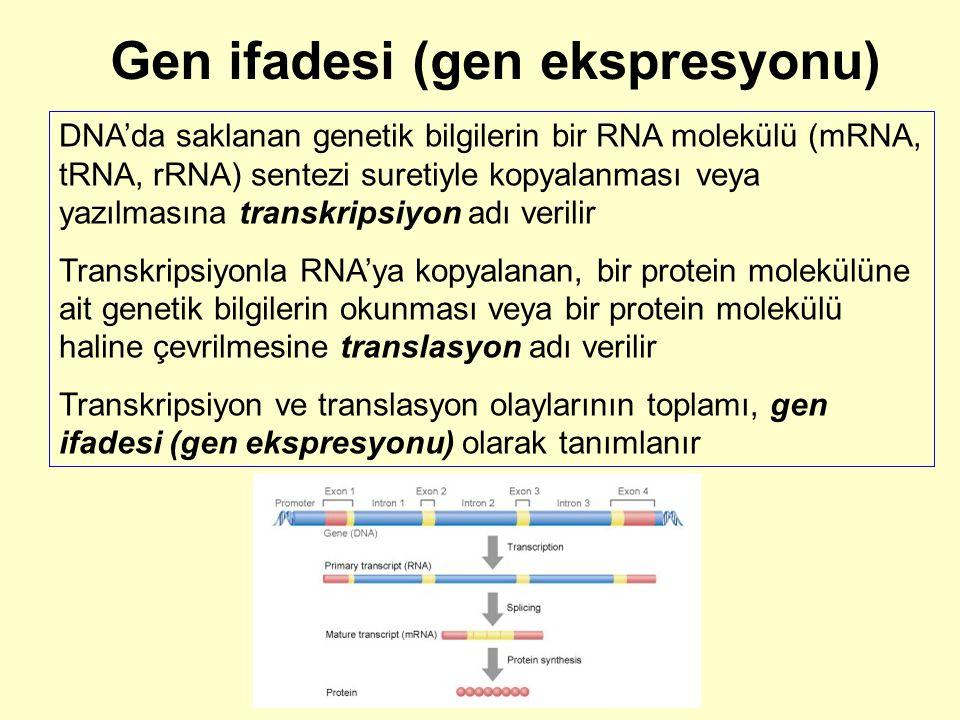 Gen ifadesi (gen ekspresyonu) DNA'da saklanan genetik bilgilerin bir RNA molekülü (mRNA, tRNA, rRNA) sentezi suretiyle kopyalanması veya yazılmasına t