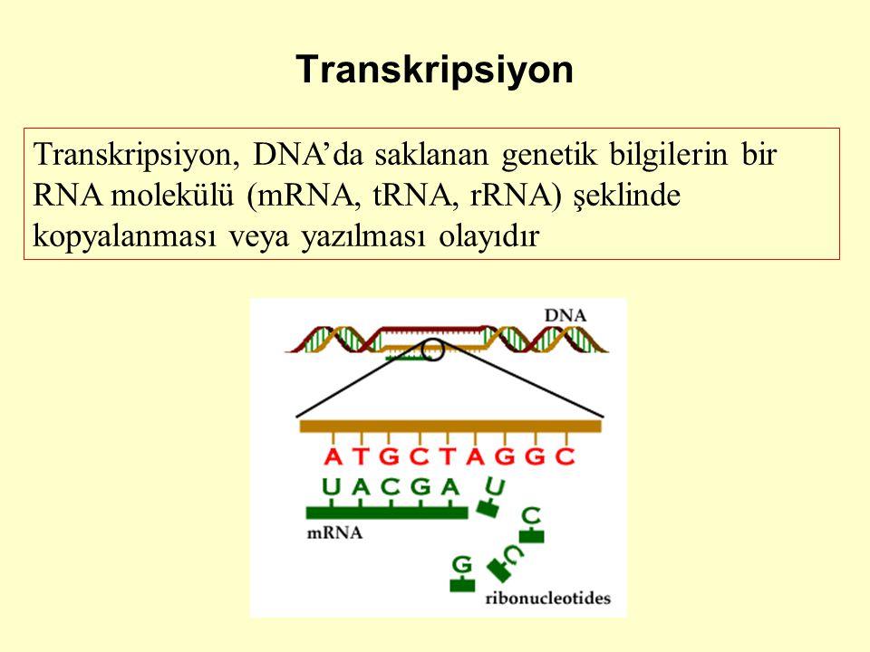 Transkripsiyon Transkripsiyon, DNA'da saklanan genetik bilgilerin bir RNA molekülü (mRNA, tRNA, rRNA) şeklinde kopyalanması veya yazılması olayıdır