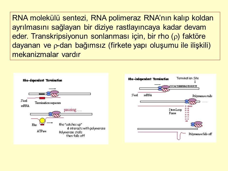 RNA molekülü sentezi, RNA polimeraz RNA'nın kalıp koldan ayrılmasını sağlayan bir diziye rastlayıncaya kadar devam eder. Transkripsiyonun sonlanması i