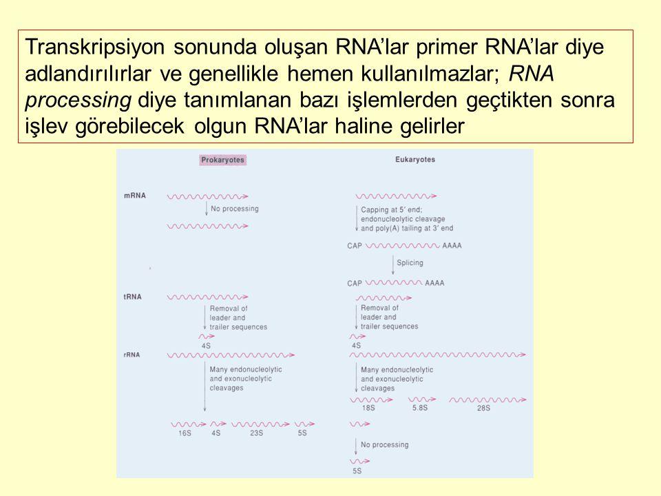 Transkripsiyon sonunda oluşan RNA'lar primer RNA'lar diye adlandırılırlar ve genellikle hemen kullanılmazlar; RNA processing diye tanımlanan bazı işle