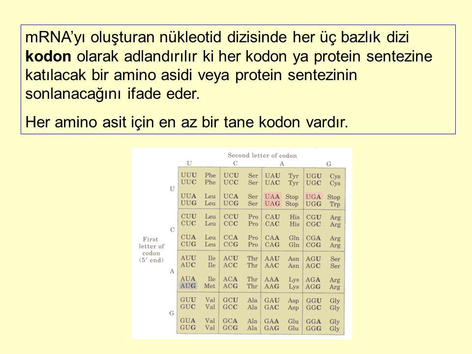 mRNA'yı oluşturan nükleotid dizisinde her üç bazlık dizi kodon olarak adlandırılır ki her kodon ya protein sentezine katılacak bir amino asidi veya pr