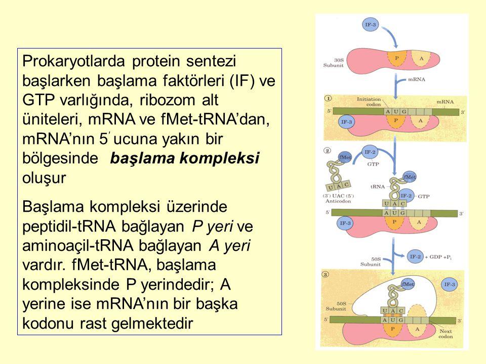 Prokaryotlarda protein sentezi başlarken başlama faktörleri (IF) ve GTP varlığında, ribozom alt üniteleri, mRNA ve fMet-tRNA'dan, mRNA'nın 5 ′ ucuna y