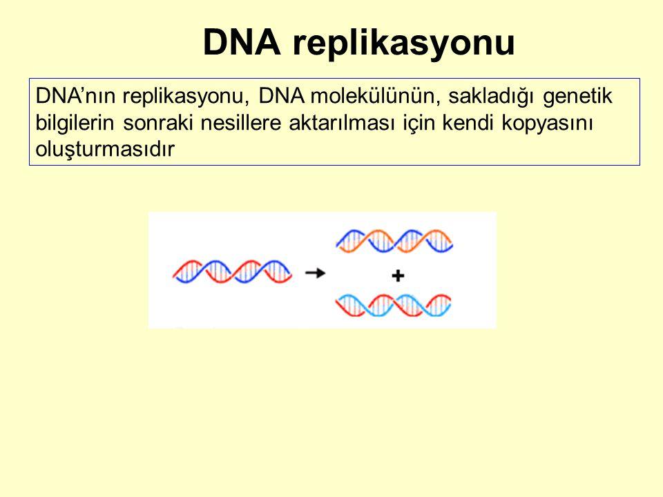 DNA replikasyonu DNA'nın replikasyonu, DNA molekülünün, sakladığı genetik bilgilerin sonraki nesillere aktarılması için kendi kopyasını oluşturmasıdır