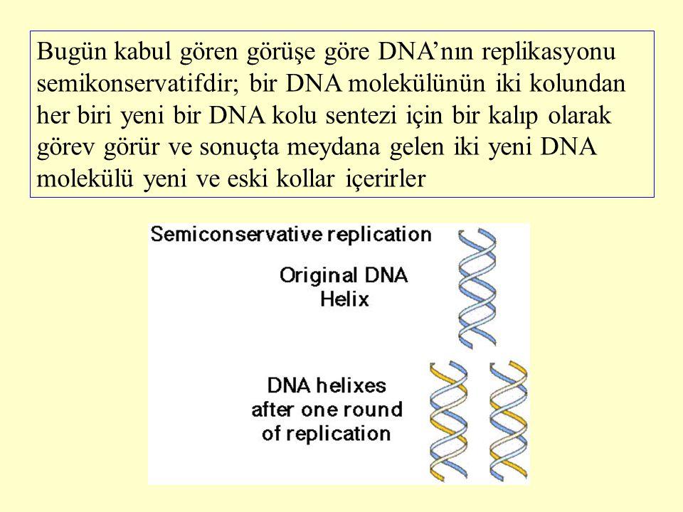 Bugün kabul gören görüşe göre DNA'nın replikasyonu semikonservatifdir; bir DNA molekülünün iki kolundan her biri yeni bir DNA kolu sentezi için bir ka