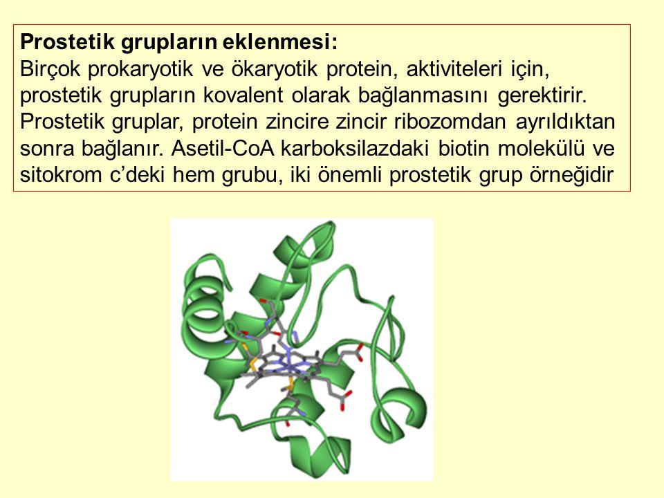 Prostetik grupların eklenmesi: Birçok prokaryotik ve ökaryotik protein, aktiviteleri için, prostetik grupların kovalent olarak bağlanmasını gerektirir