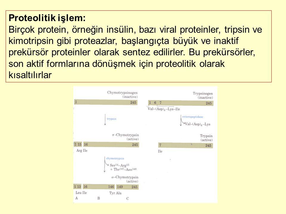 Proteolitik işlem: Birçok protein, örneğin insülin, bazı viral proteinler, tripsin ve kimotripsin gibi proteazlar, başlangıçta büyük ve inaktif prekür