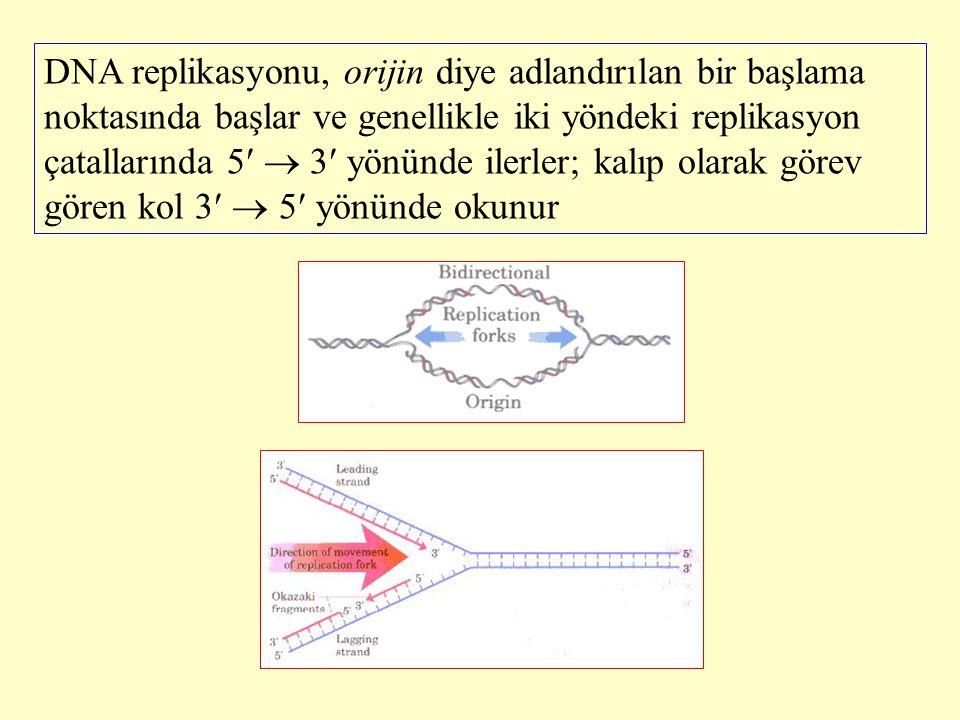 DNA replikasyonu, orijin diye adlandırılan bir başlama noktasında başlar ve genellikle iki yöndeki replikasyon çatallarında 5  3 yönünde ilerler; kal