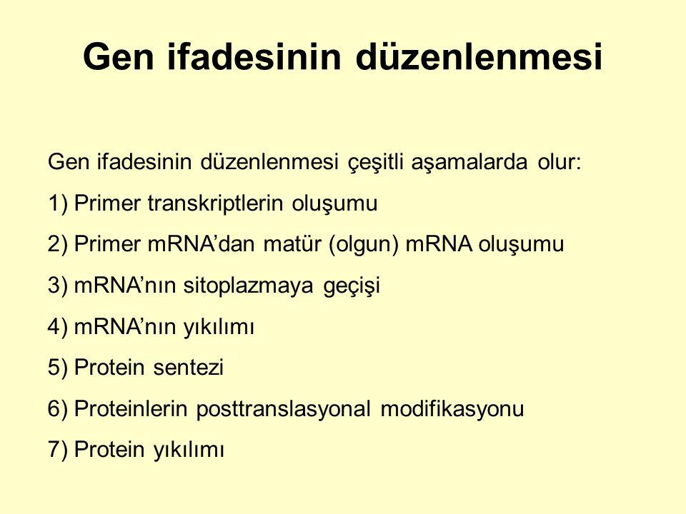 Gen ifadesinin düzenlenmesi Gen ifadesinin düzenlenmesi çeşitli aşamalarda olur: 1) Primer transkriptlerin oluşumu 2) Primer mRNA'dan matür (olgun) mR