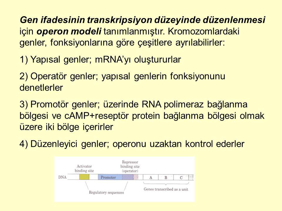 Gen ifadesinin transkripsiyon düzeyinde düzenlenmesi için operon modeli tanımlanmıştır. Kromozomlardaki genler, fonksiyonlarına göre çeşitlere ayrılab