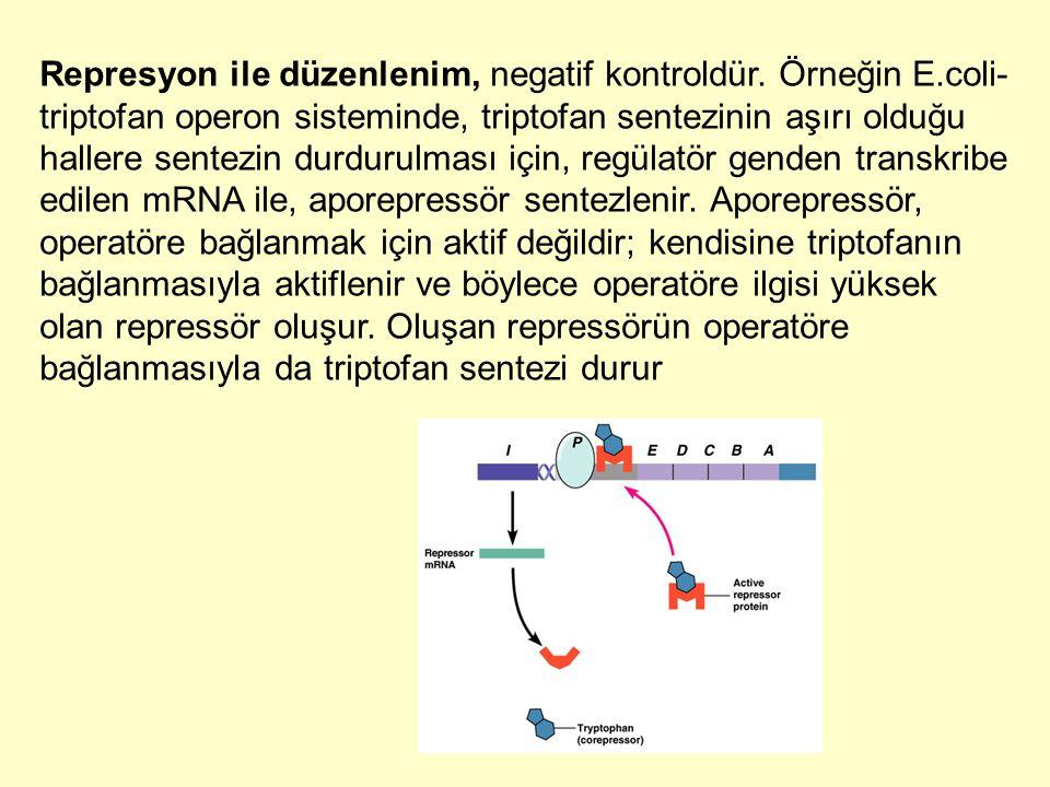 Represyon ile düzenlenim, negatif kontroldür. Örneğin E.coli- triptofan operon sisteminde, triptofan sentezinin aşırı olduğu hallere sentezin durdurul